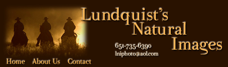 Lundquist's Natural Images